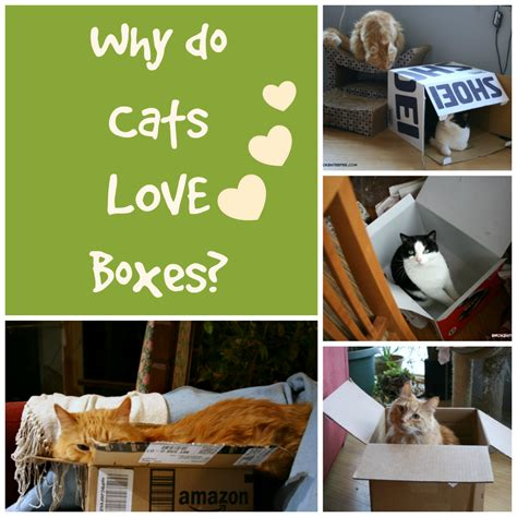 Why Do Cats Paw At The Floor by Pawculture Brings You Pet Lifestyle Pet Diy Pet Recipes Pet Tips And More