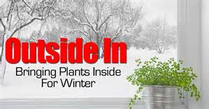 Winter Gardening Indoors - outside in bringing plants inside for winter
