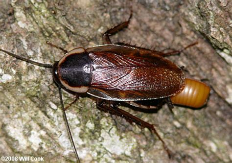 termite pest controls circulatory system  cockroach