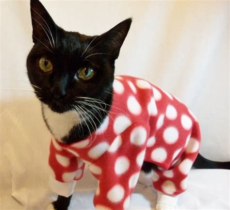 Pajamas Cat Or by Top 10 Images Of Cats In Pajamas