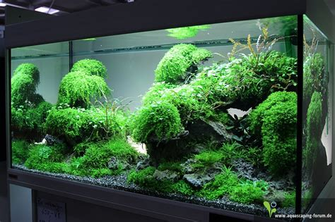 Planted Aquarium Aquascaping by The Of The Planted Aquarium 2013 Aquascape 169 Adrie