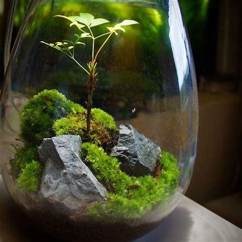 best 25 moss terrarium ideas on pinterest moss garden plants for terrariums and mini gardens