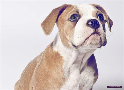 puppy photoshoot miley s puppy photoshoot miley cyrus photo 29211603 fanpop