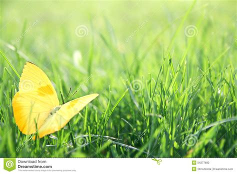 yellow butterfly in green grass background stock photo