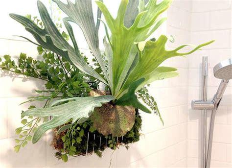 indoor plants bathroom bathroom plants best indoor plants 7 picks for every room bob vila