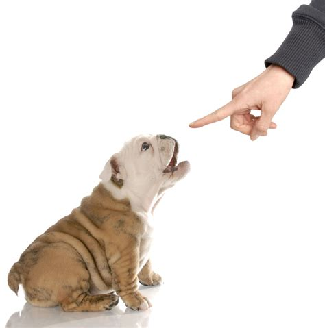 how to not to bark when left alone how to cure problem barking animal clinic of morris plains