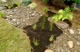 excessive water and in house 314 best gardening images on summer garden summer plants and outdoor spaces