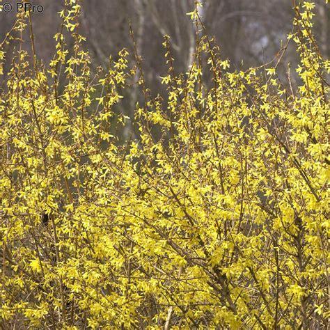 Ganzjahres Pflanzen naturagart shop ganzjahres sortiment mittel kaufen