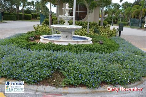 salt ls and plants 22 best plants of jamaica groundcovers images on
