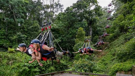 jungle swing minjin swing australia 187 aj hackett cairns