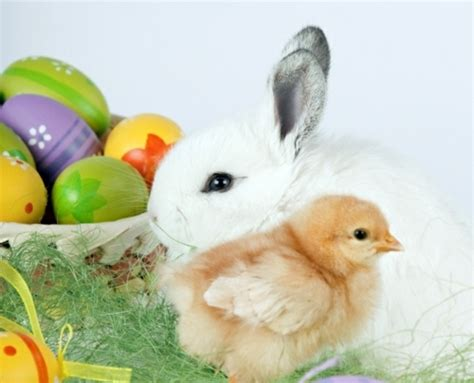 why is the rabbit associated with easter the legend of the easter bunny where does the easter