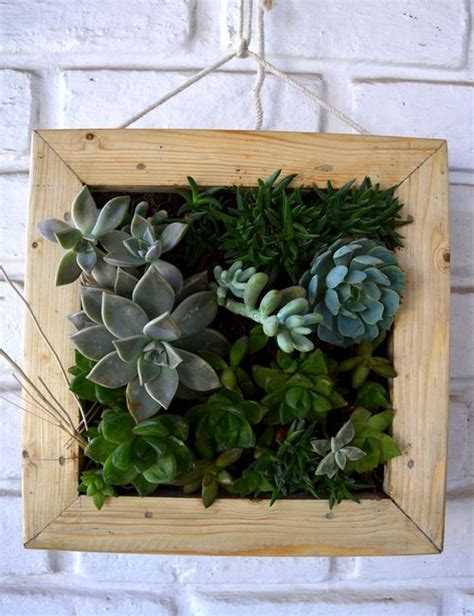 Succulent Frame My Farmscape - succulent hanging frame only for bangalore delivery