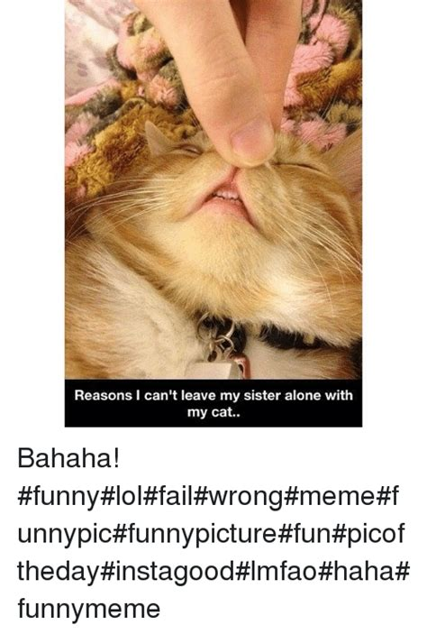 Xx Meme - 143 funny cats funny and xx memes of 2016 on sizzle