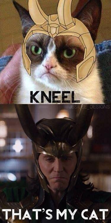 Cat Meme Faces - 126 best images about grumpy cat on pinterest memes