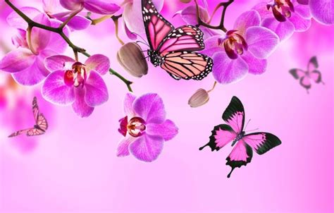 orchid blue water reflection flowers beautiful orchid wallpaper flowers flowers butterflies orchid blossom