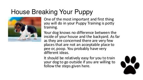 house breaking dogs pitbull puppies potty training