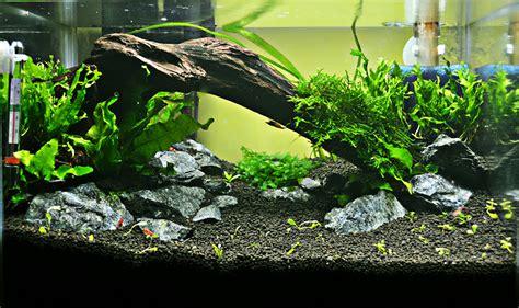 membuat dasar aquascape sekilas mengenai aquascape