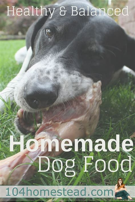 why do dogs always want food healthy and balanced homemade dog food at home