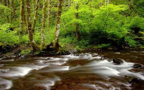 wallpaper jalan keren foto hutan terbaru yang sangat indah