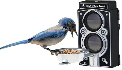 bird photo booth 2 0 feeder with bluetooth remote for ios