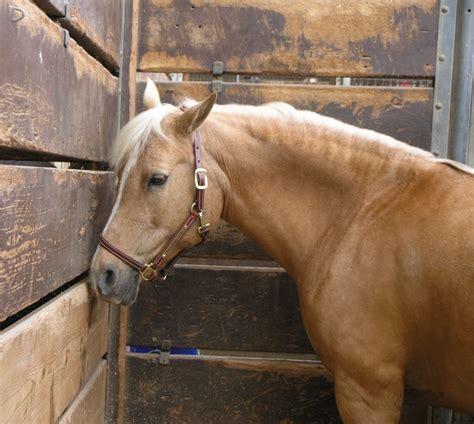 nice hourse gorgeous nice horse big animal pics