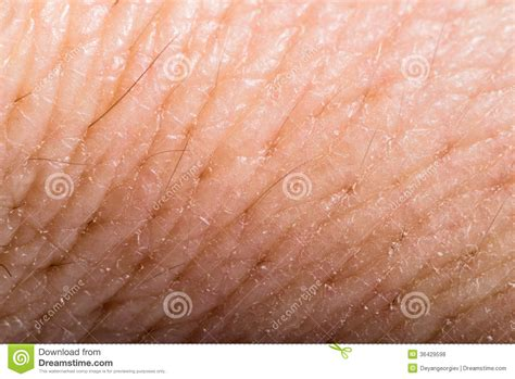 picture of up human skin macro epidermis texture csp17528076 search stock photography up human skin macro epidermis royalty free stock photos image 36429598