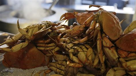 Whats In Season Dungeness Crabs by California S Dungeness Crab Season Won T Open In Time For