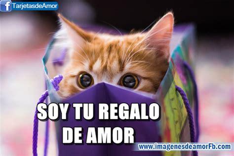 imagenes lindas de amor de gatitos gatitos lindos con frases bonitas de amor para descargar
