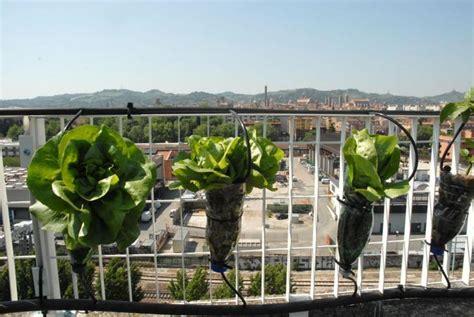 l orto sul terrazzo l orto sul terrazzo corrieredibologna
