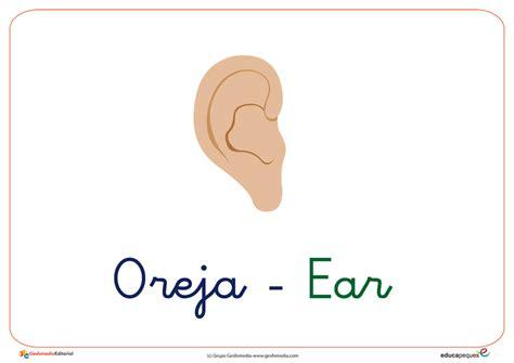imagenes en ingles con e fichas de vocabulario con la letra o oreja