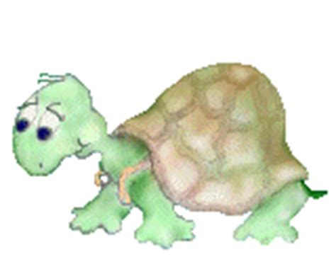 imagenes full hd gif gifs animados de tortugas gif de tortuga imagenes animadas