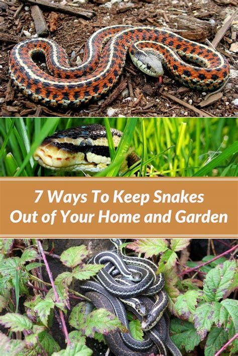 7 ways to keep snakes out of your home and garden home