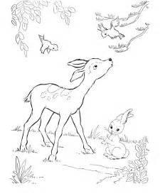 Baby Deer Coloring Pages 2png sketch template