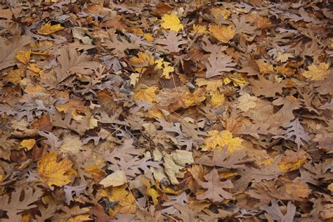 leaves on forest floor free stock photo domain