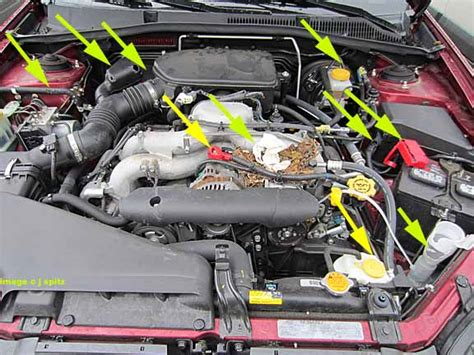 a rodent chewed an engine compartment photos