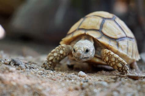 care   tortoise