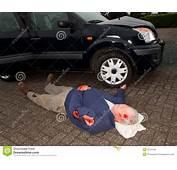 Cadavere Di Incidente Stradale Fotografia Stock  Immagine