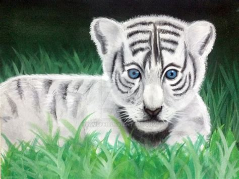 Baby White Tiger baby white tiger wallpaper with blue wallpapers gallery