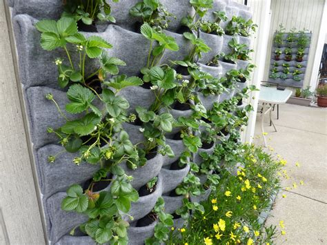 Plants On Walls Florafelt Vertical Gardens Plants For Garden Walls