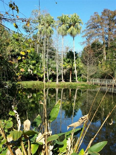 Mead Gardens Winter Park Fl - 17 best images about by car on pinterest lakes restaurant and beaches