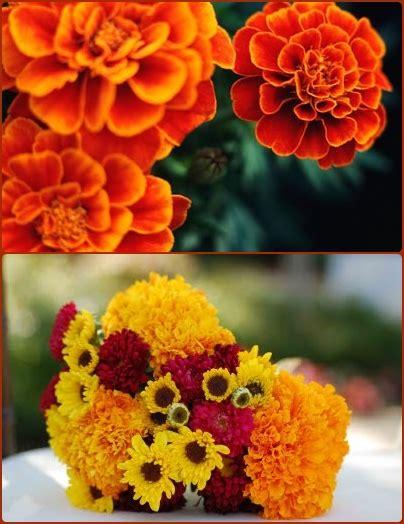 fall flowers in season fall flowers in season www pixshark com images