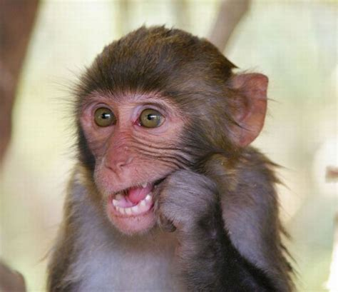 New Funny Pictures: cute monkey pictures, cute baby monkeys