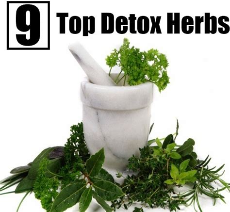 Best Herbs For Detox by Top 9 Detox Herbs Diy Home Remedies Kitchen Remedies