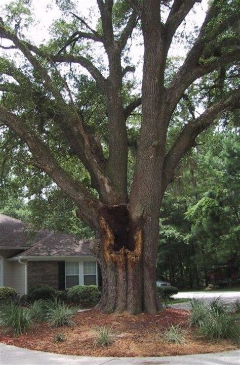 sams trees should homeowners seek professional assistance in diagnosing their trees for hazard and