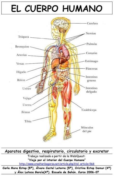 el cuerpo humano 848016977x 877ygug partes del cuerpo humano