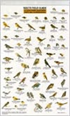 southern birds backyard guide internal server error