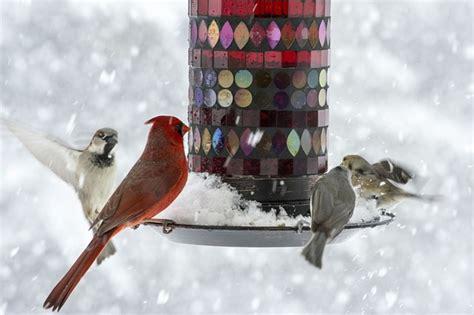 tips on winter bird feeding wenke greenhouses