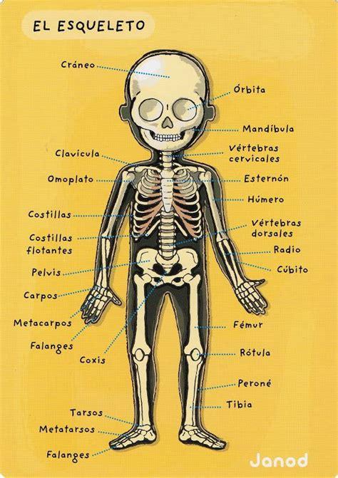 el cuerpo el cuerpo humano gl 242 ria p picasa web albums el