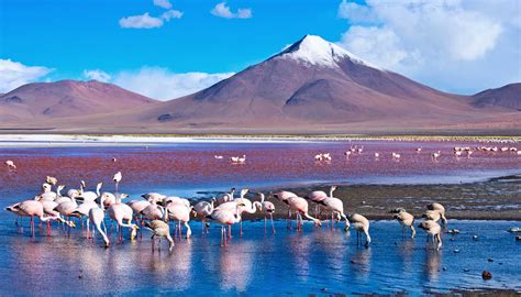 Free Home Plan by Bolivia Travel Guide And Travel Information