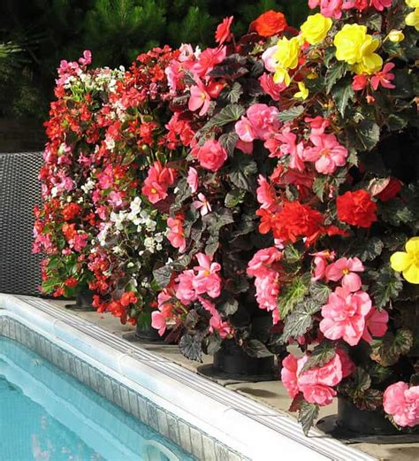 flower tower flower power great vertical planter